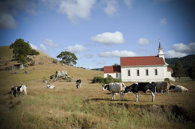 cows_church_2