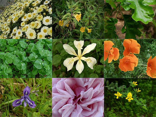 spring-flower-collage